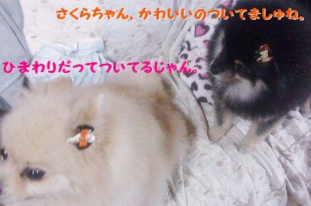 DCIM0333.jpg