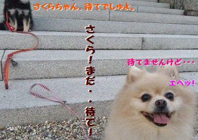 DCIM0368.jpg