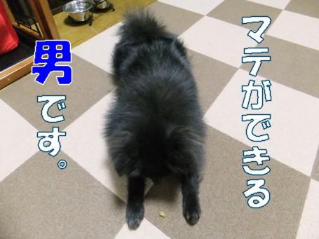 20110303_1.jpg