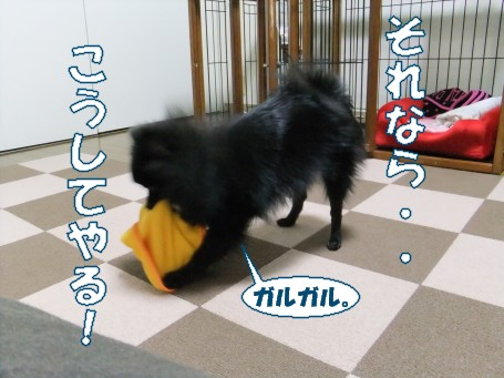 20110303_3.jpg