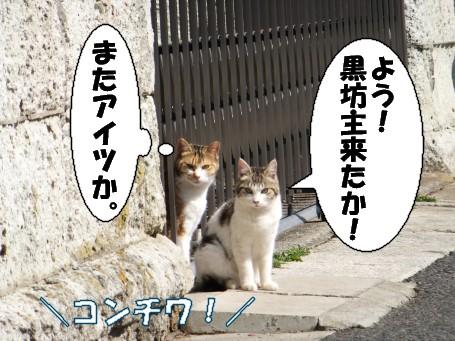 20110304_3.jpg