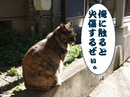 20110304_5.jpg