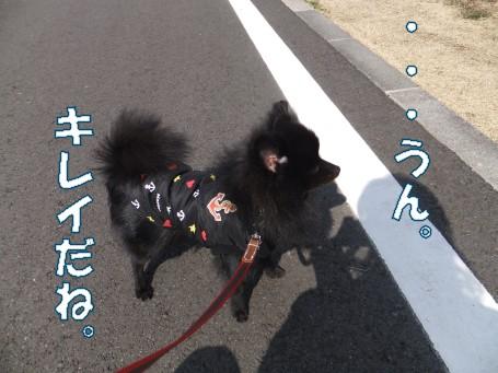 20110308_6.jpg