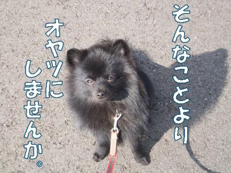 20110308_7.jpg