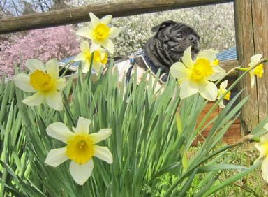 花とポンゴ_3978