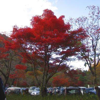 燃える秋IMG_4652