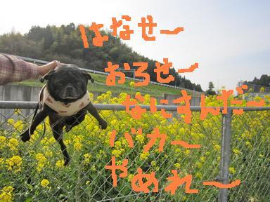 IMG_3971.jpg