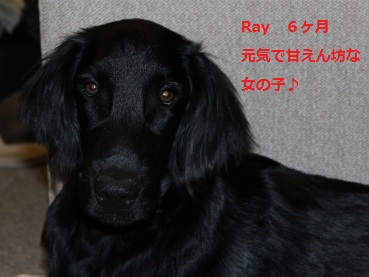 Ray6ヶ月