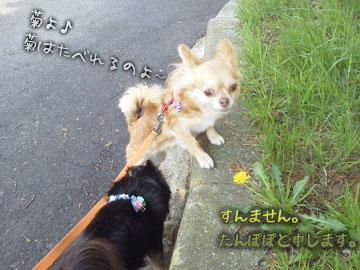 NEC_0006_20120509155214.jpg