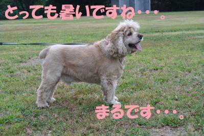 008_convert_20120807123121.jpg