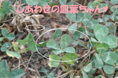 017_convert_20120807123535.jpg