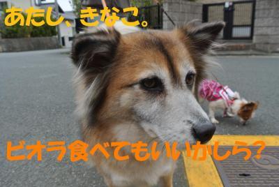 023_convert_20120525163724.jpg