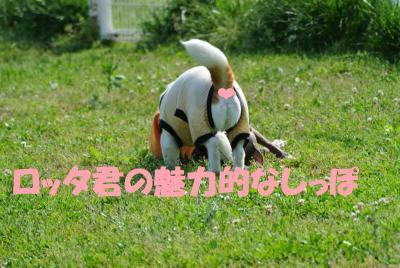 025_convert_20120522140802.jpg