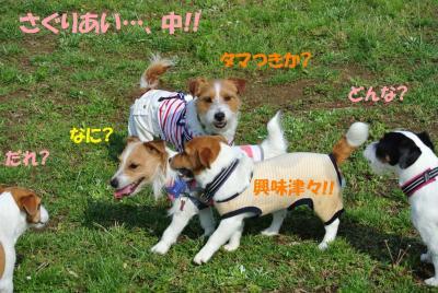 048_convert_20120522141338.jpg