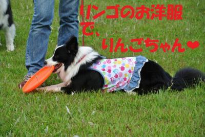 056_convert_20120611152005.jpg