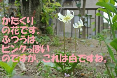 058_convert_20120525165545.jpg