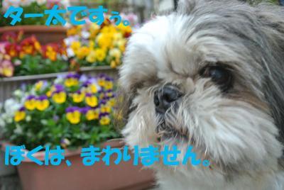 069_convert_20120525165241.jpg