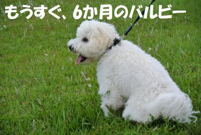 069_convert_20120611152446.jpg