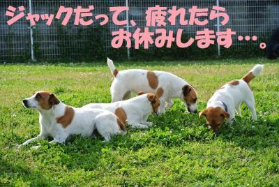 070_convert_20120522141815.jpg