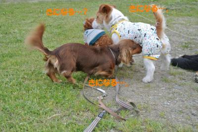 074_convert_20120605121907.jpg