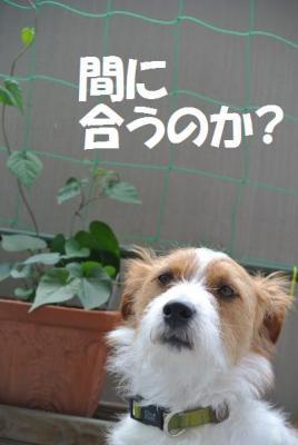 075_convert_20120710105935.jpg
