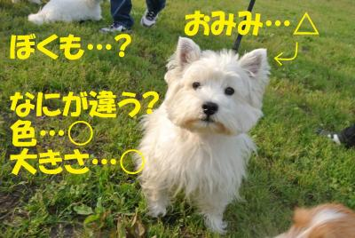 076_convert_20120530114117.jpg