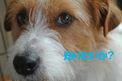080_convert_20120710104119.jpg
