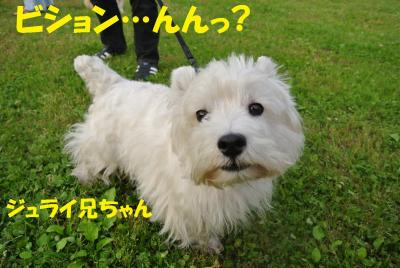089_convert_20120530114258.jpg