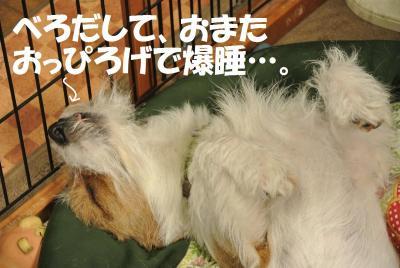 098_convert_20120611155141.jpg