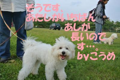 102_convert_20120530114539.jpg