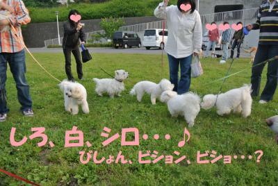123_convert_20120530115146.jpg