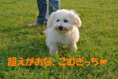 130_convert_20120530115419.jpg
