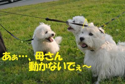 134_convert_20120530115652.jpg