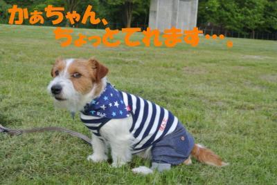135_convert_20120512181408.jpg