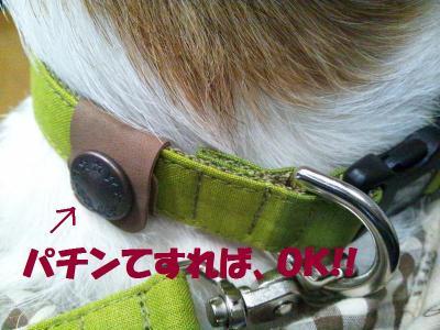DSC_1045_convert_20120228163456.jpg