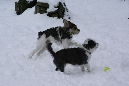 neige201302.jpg
