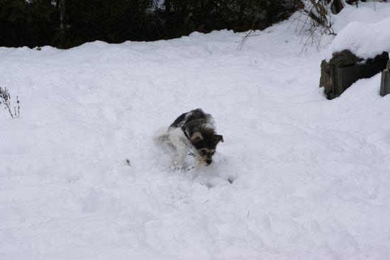 neige201303.jpg