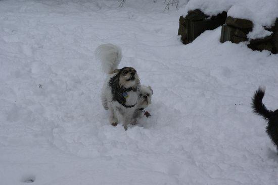 neige201305.jpg
