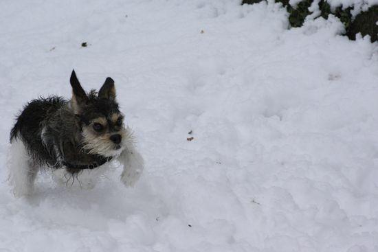 neige201307.jpg