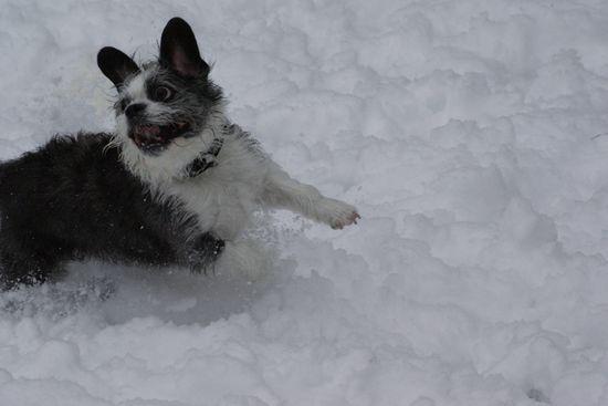 neige201310.jpg