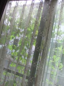 004グリーンカーテン