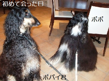 2007_09110029popo.jpg