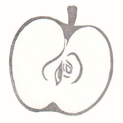 切り口はんこ・りんご