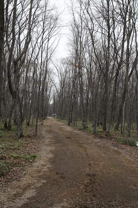 1205イコロの森07