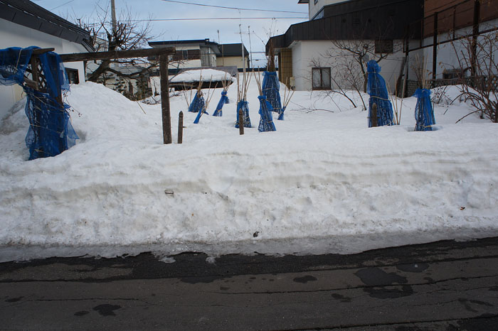 1204残雪