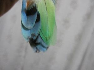 obanenobiru