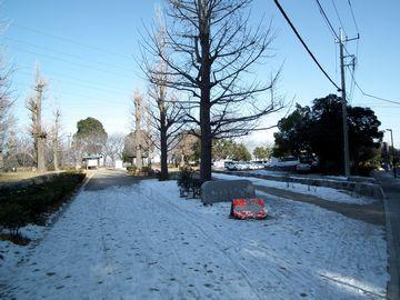 公園の雪!