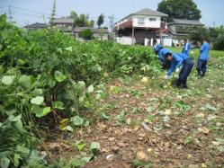 草刈り機と鎌で雑草とり