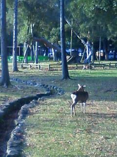 のんびりの鹿さん