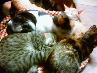 ぎゅうぎゅう猫